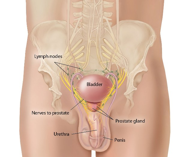 Nerve Sparing During Prostate Surgery The Prostate Zone